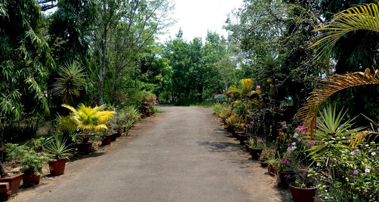 Central Forest Nursery